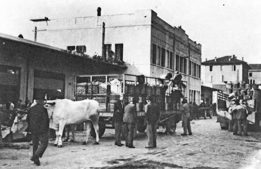 Vignola è tempo di ciliegie mercato ortofrutticolo 1942