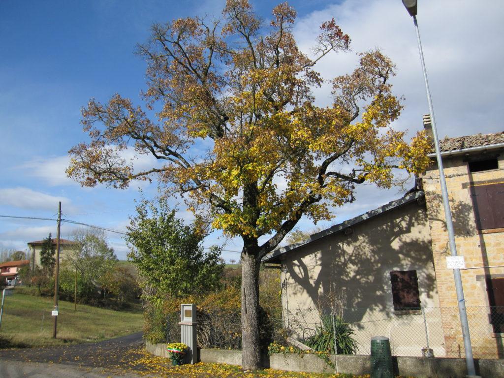 Dalla Resistenza alla Costituzione. Ospitaletto. L'albero della memoria, al quale il 13 agosto 1944 è stato impiccato il partigiano Luciano Orlandi.