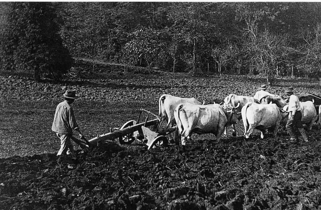L'aratura dei campi. Foto dall'Archivio del Gruppo Mezaluna - Mario Menabue. Storia della ciliegia di Vignola