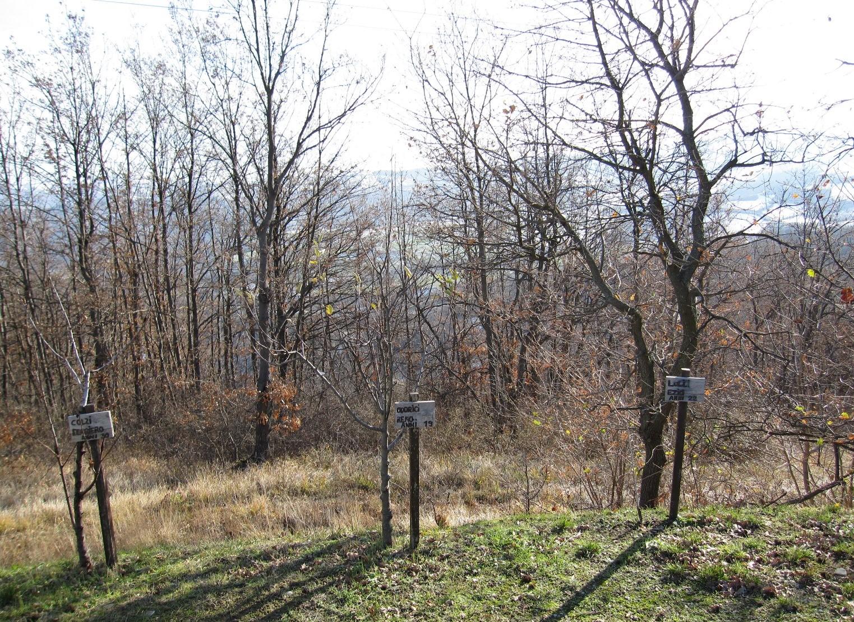 Alberi piantati in memoria degli impiccati nella strage dei Boschi di Ciano, a pochi metri dal luogo dei patiboli