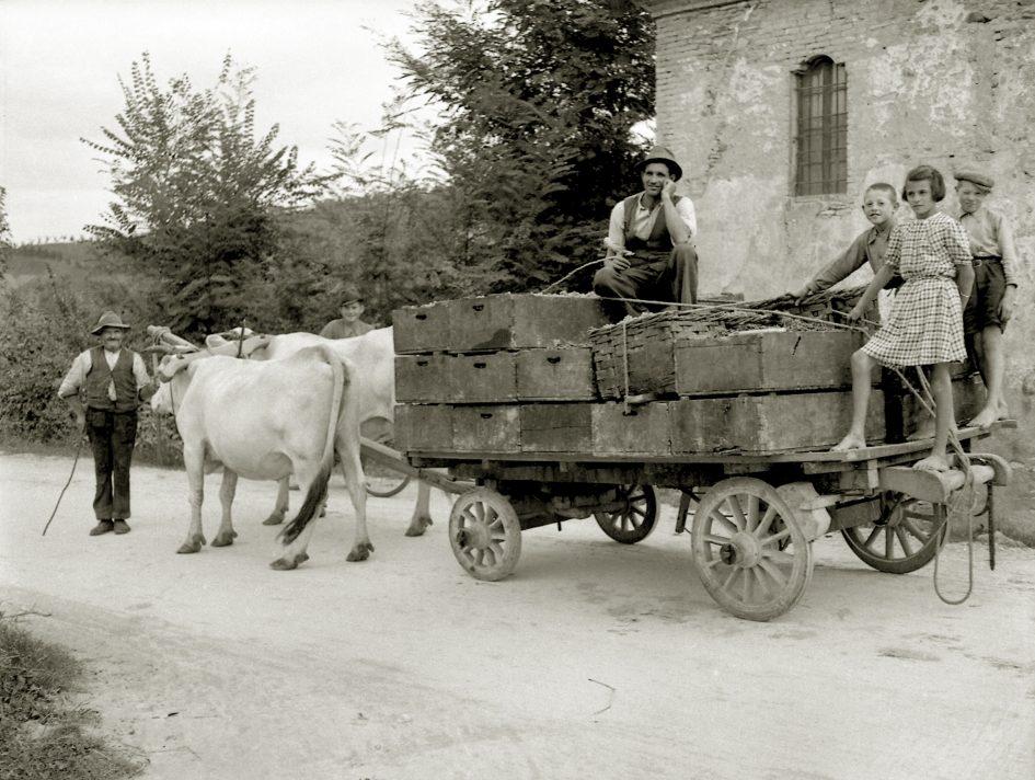 Uno scatto del fotografo Giuseppe Simonini lungo una strada di campagna a Castelvetro di Modena (anni 1930-1940). Foto tratta dall'archivio fotografico di Giuseppe Simonini, conservato in digitale presso il Gruppo di documentazione vignolese Mezaluna - Mario Menabue. (Trekking Castelvetro di Modena)